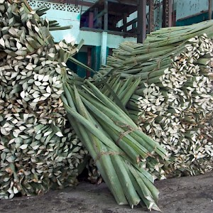 Unlike tequila, where the heart of the cactus is taken, it is the spears of the henequen that yield the sisal fibers. It was a labor-intensive business, where Mayan men would work long hours in intense heat with a machete. <a href=></a>