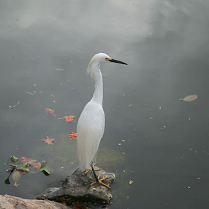 La erulla (a crane) waits patiently for a meal to pass by. Yucatan is home to hundreds of resident and migrating bird species. <a href=></a>