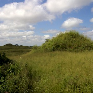 North of the Puuc range in southern Yucatan, the landscape is flat. If you see hills like these near Oxkintok, you are looking at unrestored Mayan structures. <a href=></a>