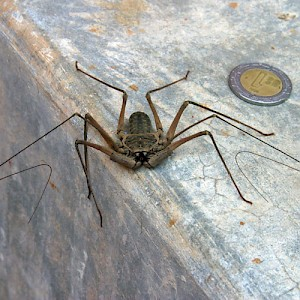Although this Yucatan version of the wolf spider looks menacing, they are harmless to humans and eat other annoying bugs. <a href=></a>