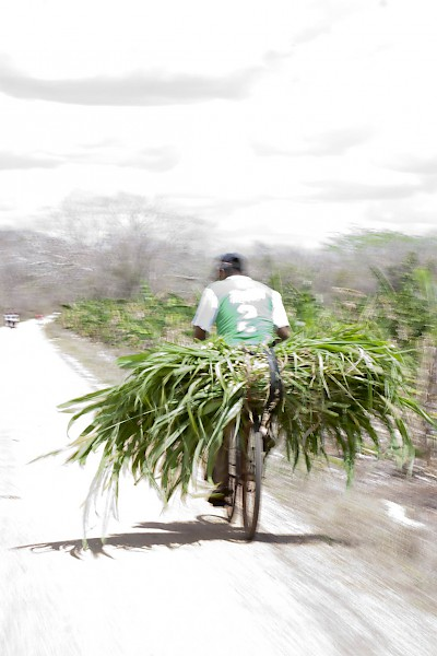 A bicyclist carries home food for his horses in Yucatan <a href=></a>