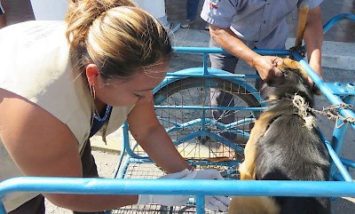 Rabies Vaccinations <a href=></a>