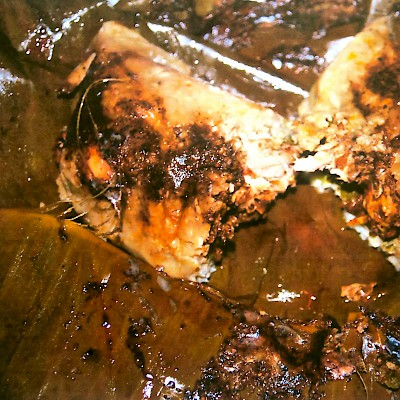 A Maya tamale stuffed with iguana meat, tomatoes and spices, and then wrapped in a banana leaf and cooked in an underground pib. <a href=></a>