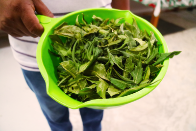 Neem leaves used for soap, and burned to smoke the hives during honeycomb collection. <a href=></a>