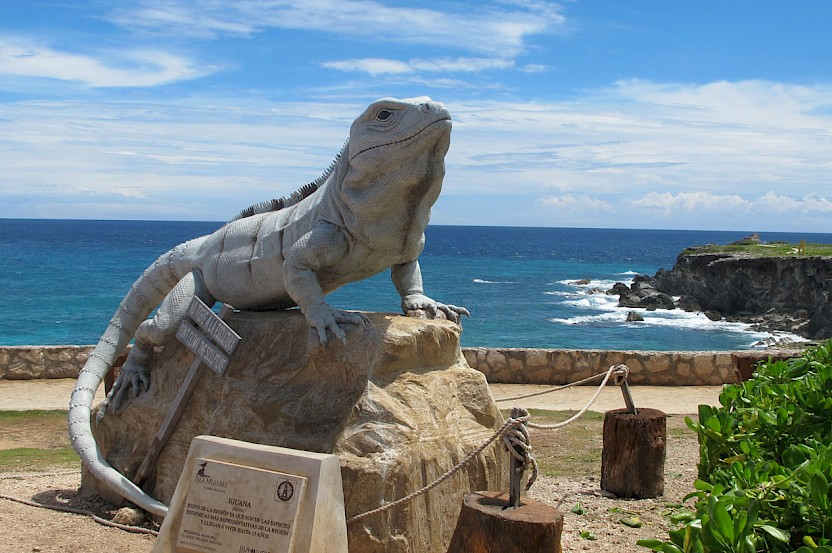Iguanas of Yucatan, Part III