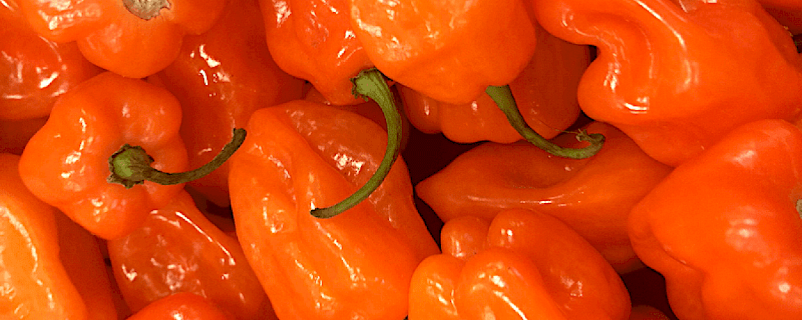Habanero Cryptocurrency - Agrocoin