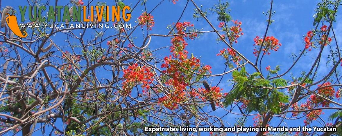 Top ten trees of yucatan yucatan living top ten trees of yucatan mightylinksfo