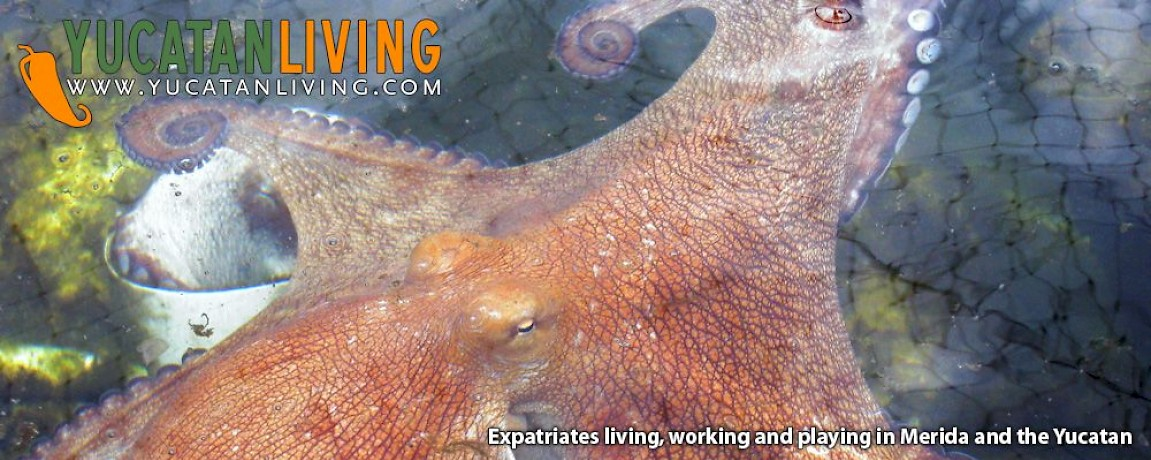Commercial Octopus Farming in Sisal
