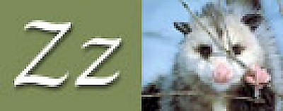 Z is for the Zorros of Yucatan <a href=></a>