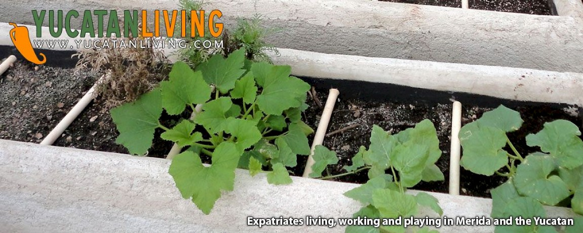 Roof Gardening in Merida Part Two