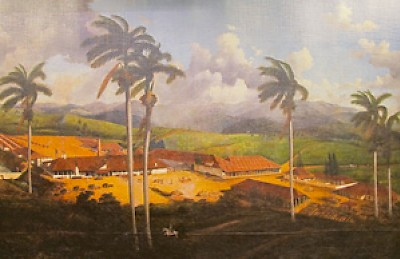 Sugar plantation in Cuba <a href=></a>