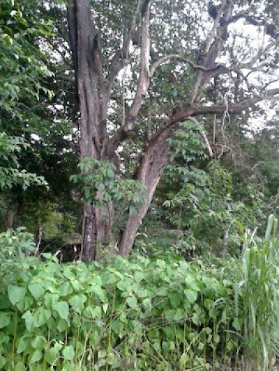 Tree on the property <a href=></a>