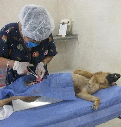 Animal Health and Protection in Yucatan Mexico <a href=></a>