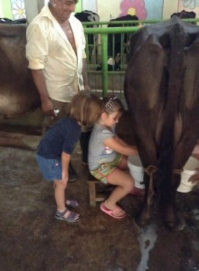 Milking Cows along the Ruta de Queso in Yucatan <a href=></a>