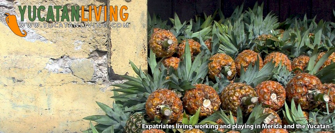 Merida News: Organic Produce, Expat Housing
